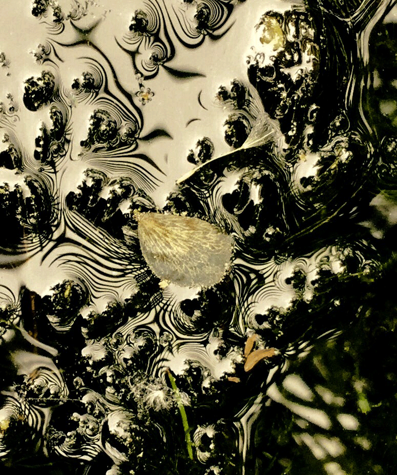 Minima Naturalia_Natura Levatrice_Elisa Barbierato_Atelier Home Gallery